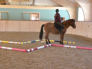Once a horse understands an exercise, then it can be made more complicated--like backing between the poles
