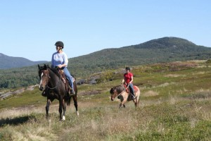 Ozzy & Echo build strength and fitness while out hacking in the blueberry fields