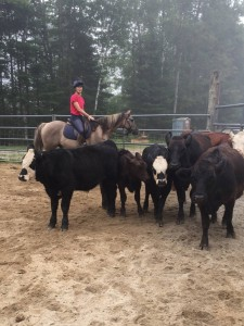 Austin moving cows!