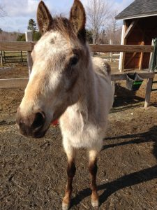Sauvée - Horse Rescue, Horses with Hope