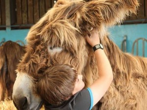 sidmouth-donkey-assisted-therapy-centre-is-calling-for-volunteers